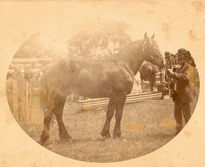 Aimable Ciril Duperouzel and his show horse at the York Agricultural Show, Western Australia
